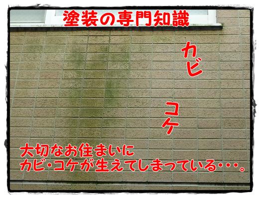 【塗装知識】外壁にカビや苔が発生した時の塗り替え対処法は?【成田建築塗装】